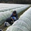 レタスの収穫から学習へ