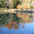 公開日 丁子田池の水面に紅葉した木が写っていました