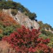 タコノアシと小豆島で見た花