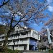 今日は学園の桜が満開です!