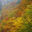 雨の秋山郷