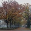 雨後の万博公園。