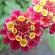 立体的な花は深度合成