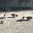 散歩道の鳥 必死に餌探し。