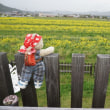 今年から始まった「かめおか 菜の花畑」。菜の花摘みや地元の味、ドッグランなど楽しみいろいろ