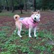 赤松林雨散歩