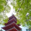 高知県のカツオには皮付きが選べる (カツオは出てきません)