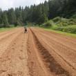 小豆、種まき