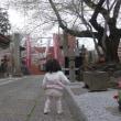 お花見散歩 澤蔵司稲荷