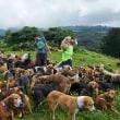 犬の楽園コスタリカ