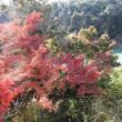 栄山寺の秋 ④ 音無川