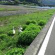 6月25日の散歩 いかんちや暑い!