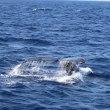 今シーズン!クジラ遭遇率100%達成!