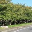 季節外れの真夏日 東武動物公園駅の南側を歩く(埼玉・宮代町)