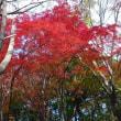 チョピット歩いて紅葉を愛でて、たまにはゆったり 師走の好日…