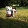 しんちゃんの山間の田んぼでも稲刈りスタート・・・