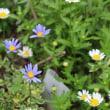 可憐な花咲くスマイリープーたち