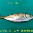 笑転爺の釣行記 6月13日☁ 長瀬・浦賀(アジ)