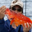 <09/15> アカハタ今季最高の大漁