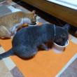 わが家の猫たちの夏