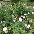 上賀茂神社&植物園