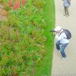 秋の里山ガーデン