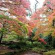 新城市まで紅葉を見に行くを~  (湯谷園地~愛知県民の森~鳳来寺山パークウェイ入口)