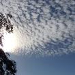 きれいな「うろこ雲」・・朝から晴れ!
