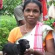 一つの目を持つ子ヤギが生まれる―インド―