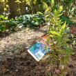 庭の改造、ちょっと休憩
