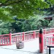 香嵐渓の青モミジ