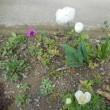 わが家の お花様達 693