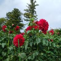 茨城县八乡花儿公园