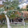 近江の「隠れ里」鶏足寺と己高山を歩く