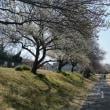 浅川サイクリングロードで高尾まで。交通事故、整体、産後調整なら「立川市のヒロ整骨院」
