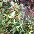 野鳥が探しやすい 赤い実