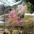 ぶらり旅・長谷寺⑥戻ります(奈良県桜井市)
