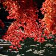 紅葉の暖簾