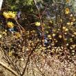 山行記録 〜 秘密の花園 〜