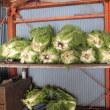 ハクサイを収穫し越冬保存対策