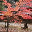 24日の散歩 ( 仁和寺往復で秋だより )