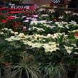 【京都府立植物園】第26回ポインセチア展開催のお知らせ(2017年12月1日~25日)