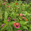 夏の花々と野菜など