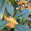 金木犀が咲く季節10.13