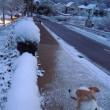 ついに積雪