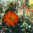 どんつきの庭 秋のショータイム