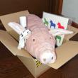 豚が来た。