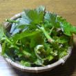 ブドウ新芽の天ぷら