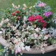 ◎ペンタスで寄せ植え&買ってきた花種