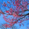 花まつり・ゆざわ☆4/29(月・祝)ですよ~♪